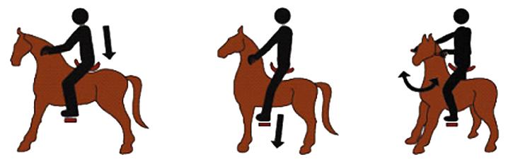 actionare ponei